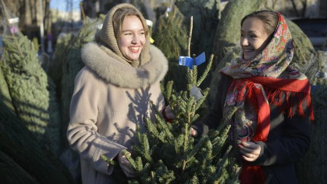 Более 370 пунктов приема елок на утилизацию открыли в Москве. Фото: архив